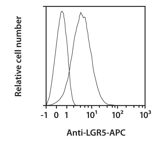 LGR5 Antibody, anti-human, REAfinity™