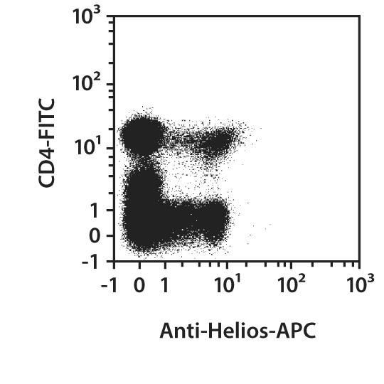 Helios Antibody, anti-human/mouse, REAfinity™