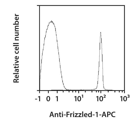 Frizzled-1 Antibody, anti-mouse, REAfinity™