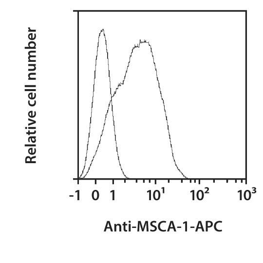 MSCA-1 Antibody, anti-human, REAfinity™