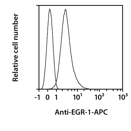 EGR-1 Antibody, anti-human, REAfinity™