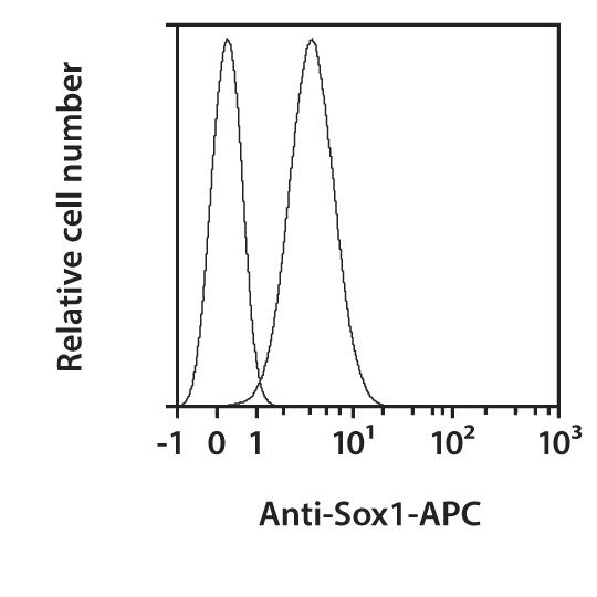 Sox1 Antibody, anti-human, REAfinity™