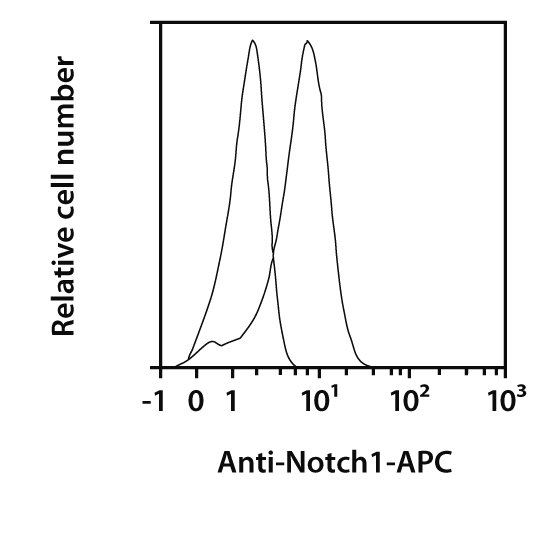 Notch1 Antibody, anti-human, REAfinity™