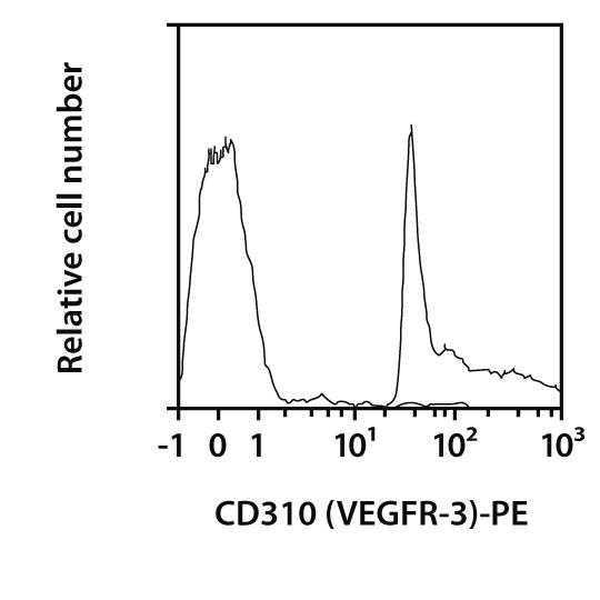 CD310 (VEGFR-3) Antibody, anti-mouse