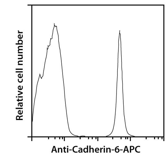 Cadherin-6 Antibody, anti-human, REAfinity™
