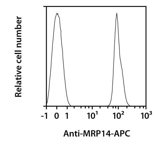 MRP14 Antibody, anti-human, REAfinity™
