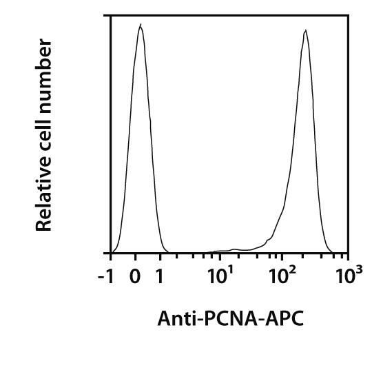 PCNA Antibody, anti-human/mouse/rat, REAfinity™