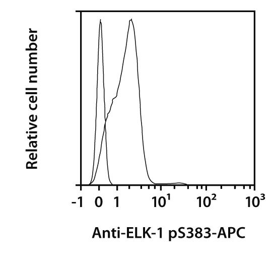 ELK-1 pS383 Antibody, anti-human, REAfinity™