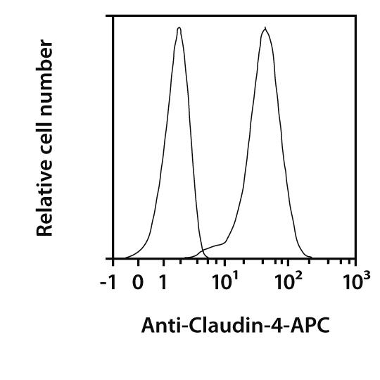 Claudin-4 Antibody, anti-human, REAfinity™