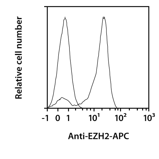 EZH2 Antibody, anti-human/mouse, REAfinity™