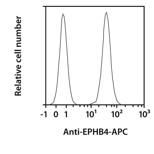 EPHB4 Antibody, anti-human, REAfinity™