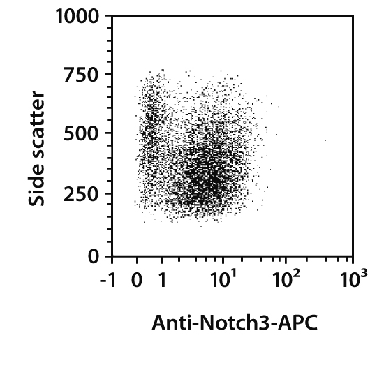 Notch3 Antibody, anti-human