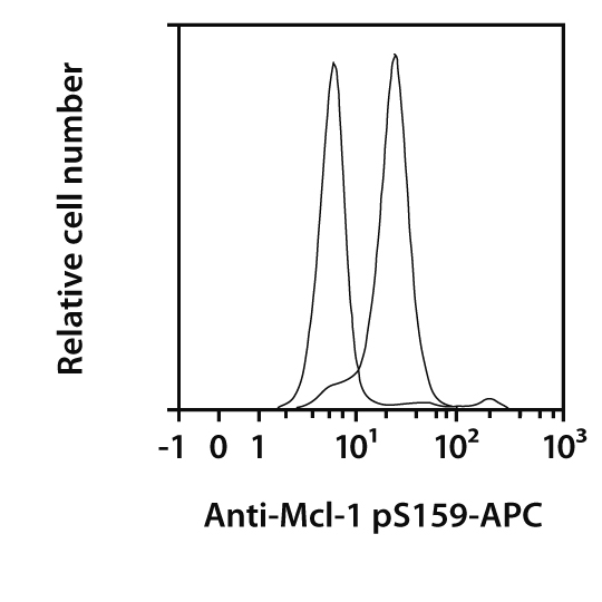 Mcl-1 pS159 Antibody, anti-human/mouse, REAfinity™