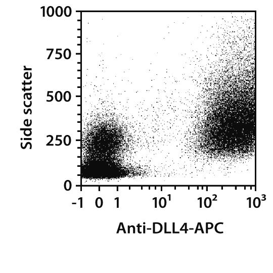 DLL4 Antibody, anti-human, REAfinity™