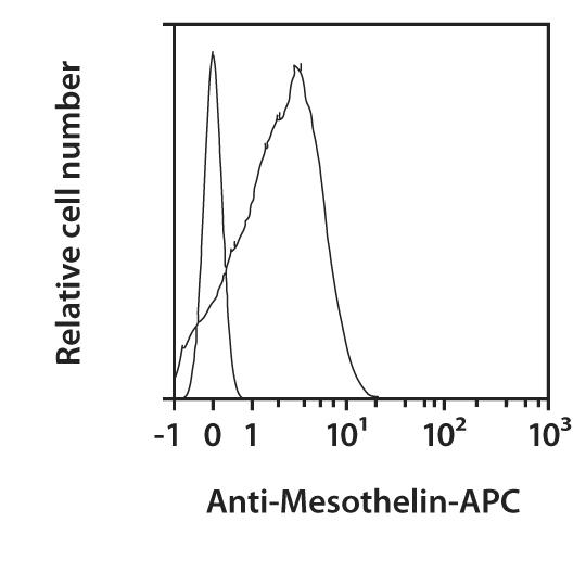 Mesothelin Antibody, anti-human, REAfinity™