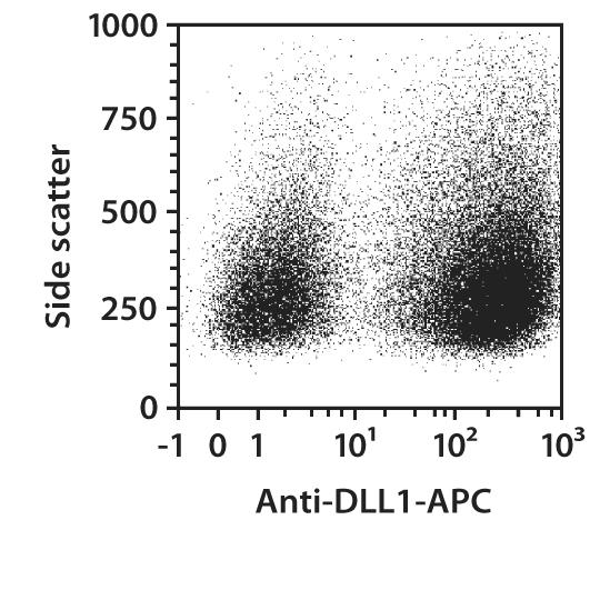 DLL1 Antibody, anti-human, REAfinity™