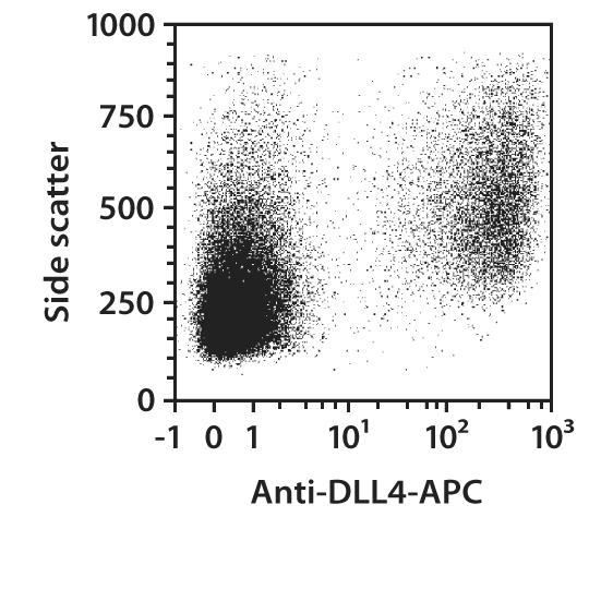 DLL4 Antibody, anti-mouse, REAfinity™