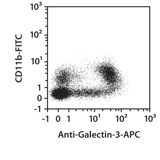 Galectin-3 Antibody, anti-human/mouse, REAfinity™