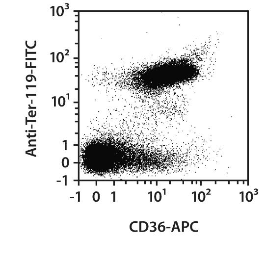 CD36 Antibody, anti-mouse, REAfinity™