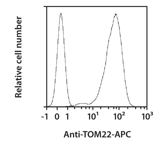 TOM22 Antibody, anti-human/mouse, REAfinity™