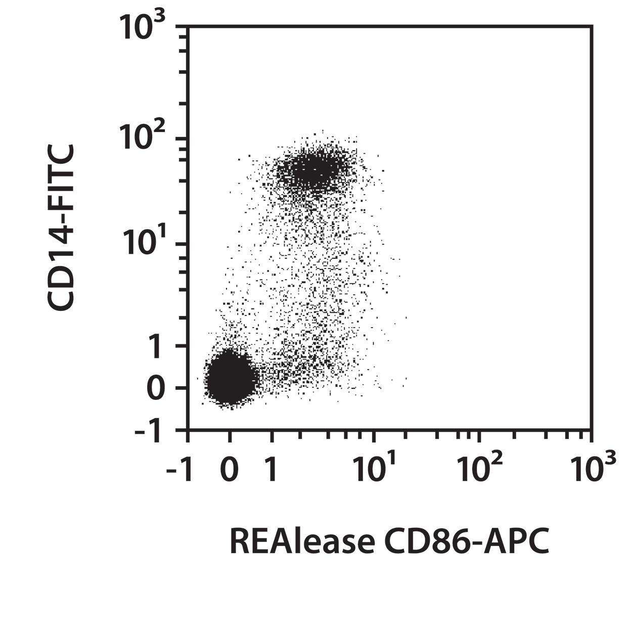 CD86 Antibody, anti-human, REAlease®